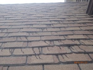 Shingle roof with black streaks, leaking roof